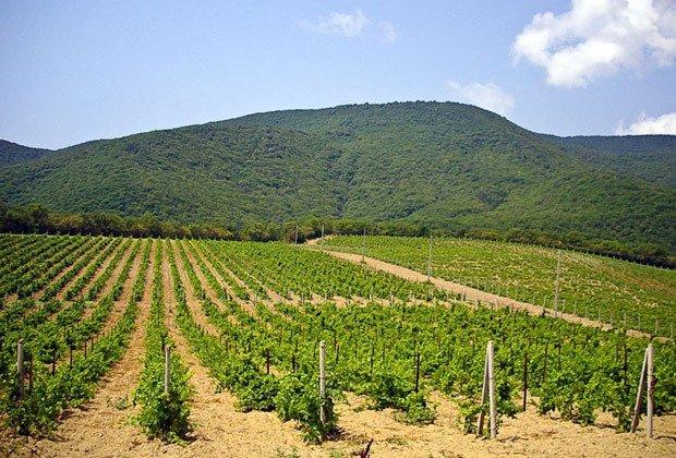 Кубанские виноделы сократили выпуск конечной продукции в 2016 году