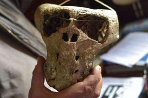 Сундук времён Третьего Рейха с черепами неизвесных существ обнаружили в Адыгее