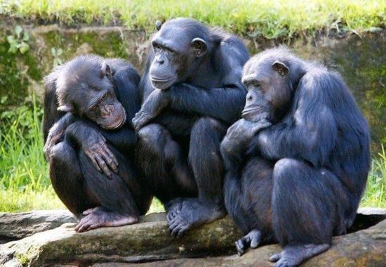 На сочинских обезьянах планируют изучать адаптацию к высокому уровню внешней радиации в космосе