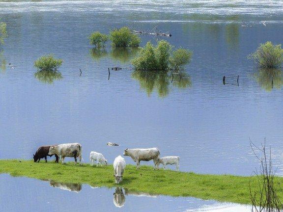Паводок в Астраханской области этой весной может оказаться опасным