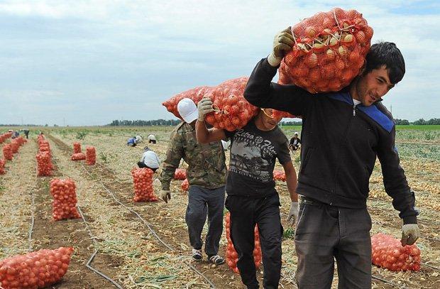 Волгоградская область резко сократила квоту на гастарбайтеров