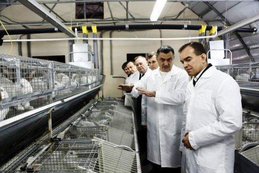 Кролиководство - перспективное дело для кубанских фермеров