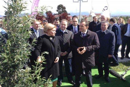 Аллея из 15 оливковых деревьев появилась в орнитологическом парке Сочи