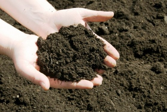 В Астрахани разрабатывают удобрения на основе микроводорослей