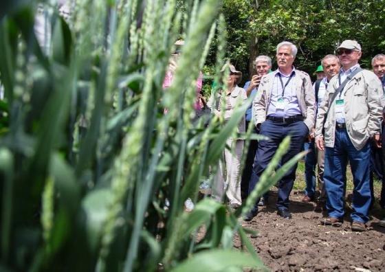 19 стран приняли участие в семинаре, посвященном вопросам выращивания и селекции пшеницы