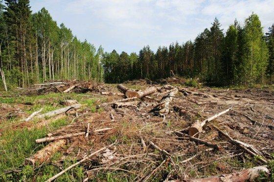 Проблемы лесного фонда обсудили в Майкопе