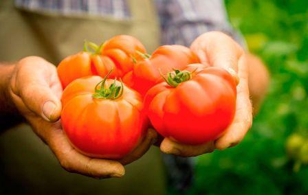 Как российские производители пользуются санкциями в сельском хозяйстве