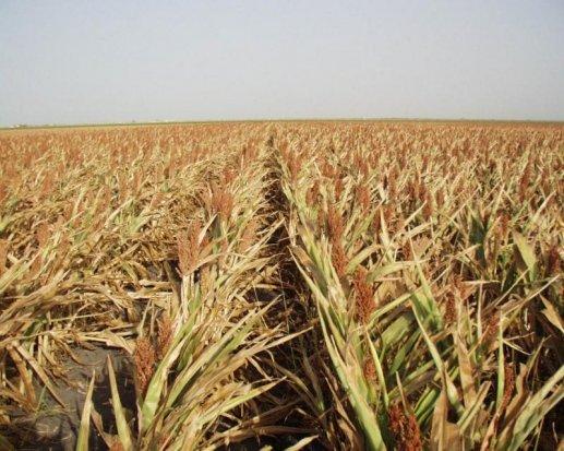 Власти Ростовской области выступили с обвинениями в адрес одного из крупнейших сельхозпроизводителей региона
