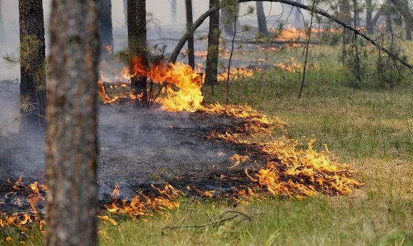 В Волгоградской области ветреная погода может привести к пожарам