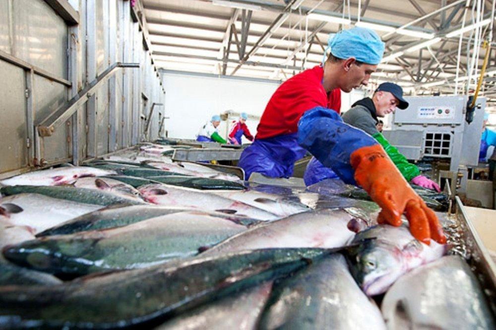В Михайловке появится рыбоперерабатывающий завод