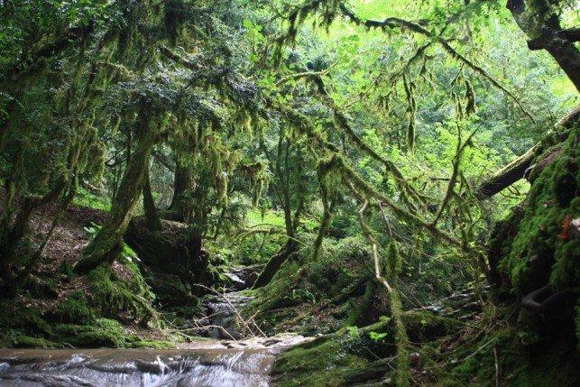 На Кубани создадут резерват для самшита