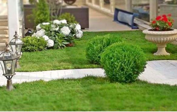 Профессиональное озеленение территории в Сочи