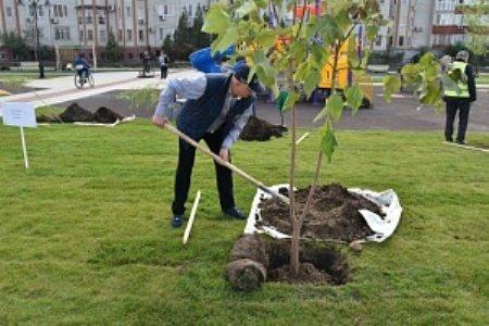 200 деревьев украсили новый отрезок набережной Астрахани