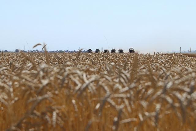 Два учхоза Краснодара достигли рекордных показателей урожайности