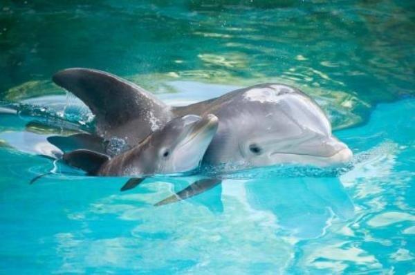 Всемирный день китов и дельфинов впервые отметят в Сочи