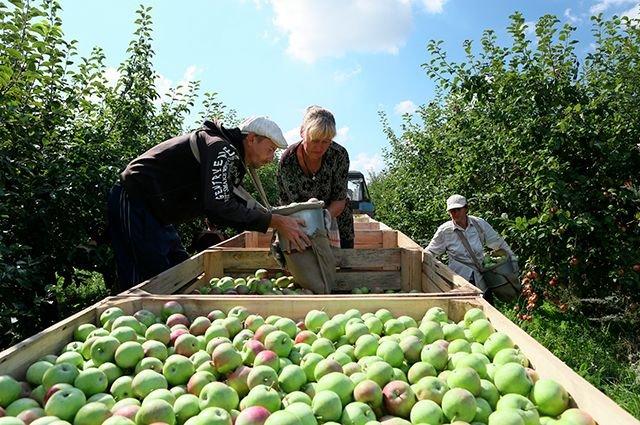 Первый в Краснодарском крае экосад создадут в Лабинском районе