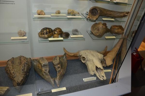 В Адыгее открылась остеологическая выставка