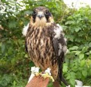 Ростовчане выхаживают больных диких птиц