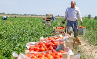Три крупных инвестпроекта в сфере АПК одобрено в Астраханской области