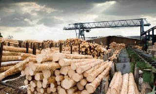Астраханские порты начнут отгружать древесину в Иран