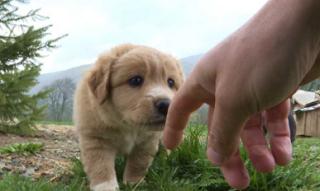 Зоозащитники Сочи требуют найти виновных в массовом истреблении бездомных животных