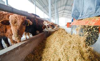 Объединение сельхозтоваропроизводителей в кооперативы принесет выгоду Калмыкии - считает Хасиков