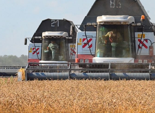 Ростовчане отчитались о собранном урожае зерна