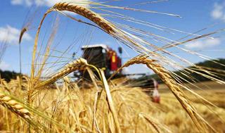 В круглосуточном режиме собирают урожай аграрии Волгоградской области
