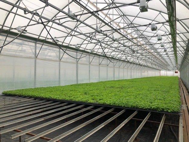 Волгоград взял курс на новую концепцию озеленения