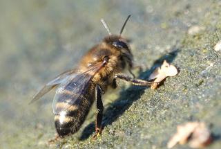 Кого винить в массовой гибели пчел на пасеках в Ростовской области