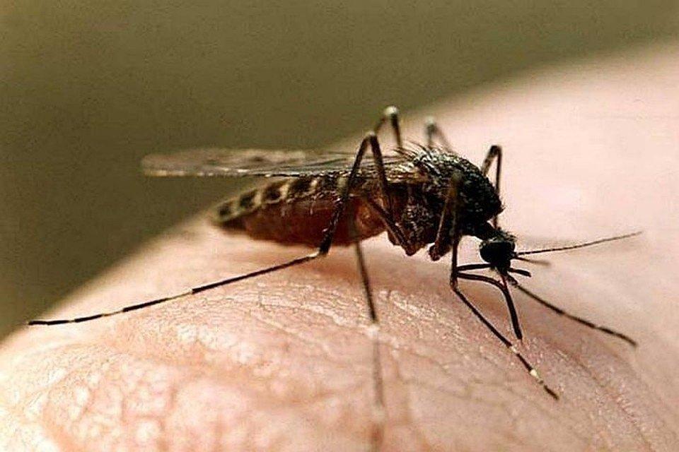 Лихорадка Западного Нила обнаружена на Кубани