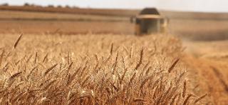 Гранты позволят оказать поддержку аграрному комплексу Калмыкии