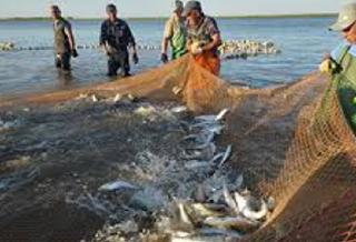 К осенней путине приступили рыбаки Астраханской области