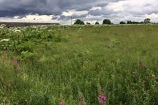 Проблему брошенных сельхозугодий обсуждали на ЮРПА в Астрахани