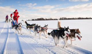 В Адыгее туристы смогут зимой отправиться на маршрут в собачьей упряжке
