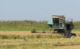 Калмыкия завершила сбор урожая риса