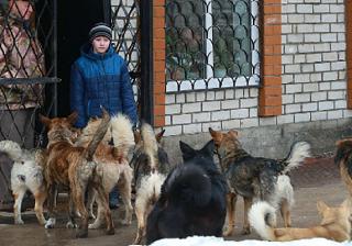 Бродячие собаки в Астрахани стали серьезной проблемой