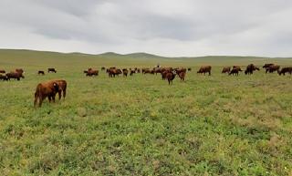 Сельское хозяйство Калмыкии должно развиваться в разных направлениях - Хасиков