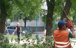 В Ростове не восстанавливают вырубленные деревья