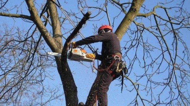 В Краснодаре хотят создать муниципальную службу по обрезке деревьев