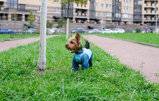 В Астрахани для выгула собак определили всего 16 площадок