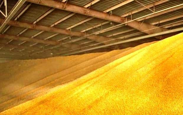 В Ростовской области запасы зерна выросли на 18 %
