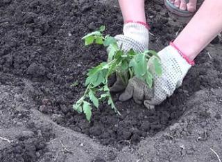 Что мешает жителям Астрахани поработать в сельском хозяйстве