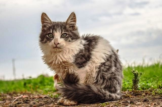 Жители Адыгеи помогут бездомным животным