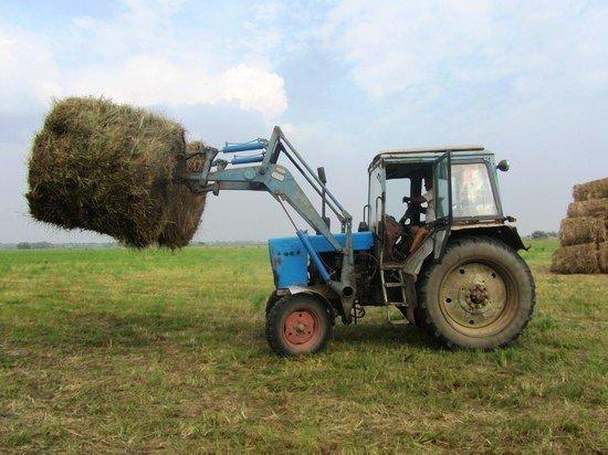 В Калмыкии уже заготовлено 50% кормов для животных