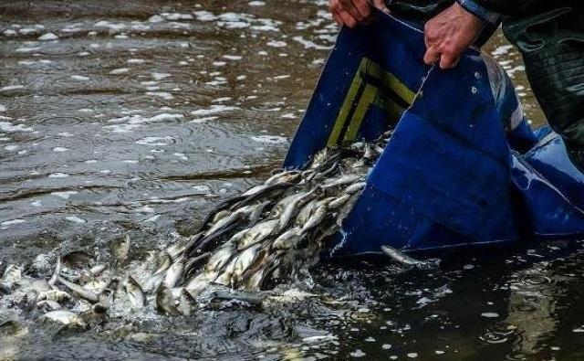 На Дону наблюдаются проблемы с рыбой