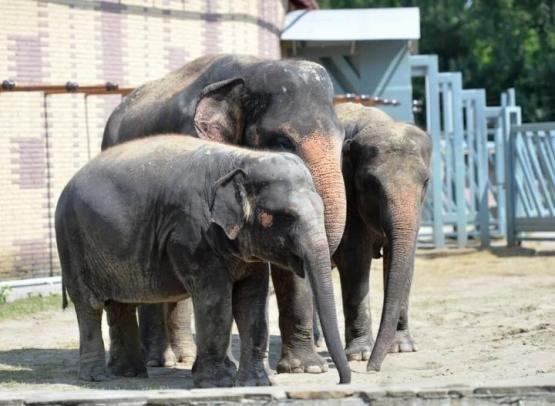 Директор Ростовского зоопарка прокомментировал ситуацию с передачей слонихи в цирк