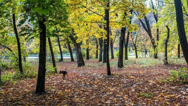 Власти Ростовской области пообещали сохранить таганрогскую рощу «Дубки»