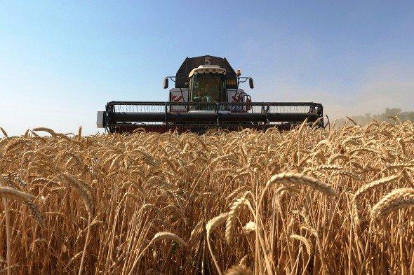Кубань отдала пальму первенства по сбору зерна Ростовской области