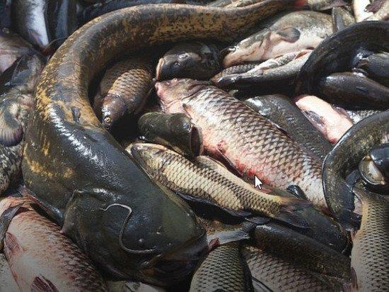 В Калмыкии идет промысел рыбы
